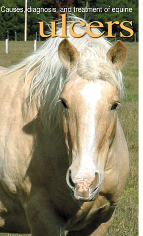 a-horse-ulcer-